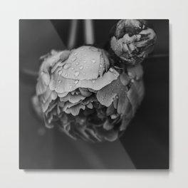 Peony after the rain - Black and White Metal Print