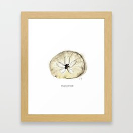 Sand Dollar specimen (burrowing sea urchin of the order Clypeasteroida) Framed Art Print