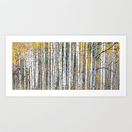 Aspensary forests Art Print