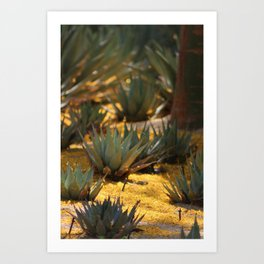 Palo Brea Flowers Covering Agave at Sunnyland Art Print