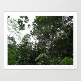 Rainforest Vibes Art Print