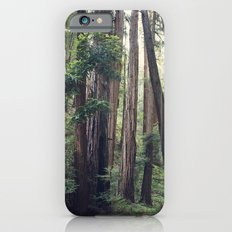 The Redwoods at Muir Woods iPhone 6s Slim Case