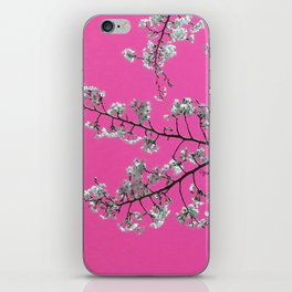 Spring, Cherry Blossom Time iPhone Skin