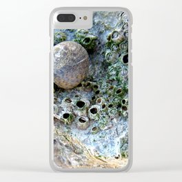 Nacre rock with sea snail Clear iPhone Case