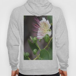 Capers Flower And Fruits Hoody