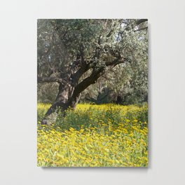 The Old Olive Grove in Ozankoy Metal Print