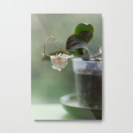 Faded Orchid Metal Print
