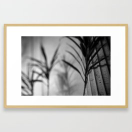 black+white palms Framed Art Print