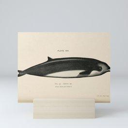 W Sidney Berridge - A Book of Whales (1900) - Figure 31: Cuvier's Beaked Whale Mini Art Print