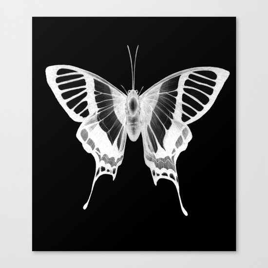 Butterfly's Ghost Canvas Print