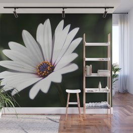 Daisy flower blooming close-up Wall Mural