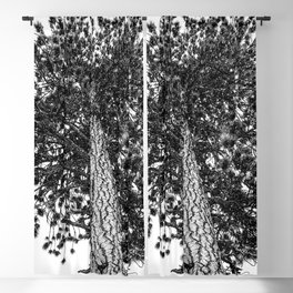 Tree Top // Snowy Winter Alpine Branches Trunk Nature Landscape Photography Black and White Decor Blackout Curtain