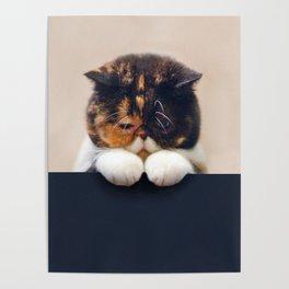Lonley Cat Poster