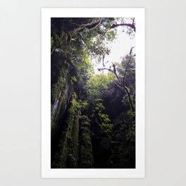 Winchead Cave Entrance III, Charleston, Buller, New Zealand Art Print