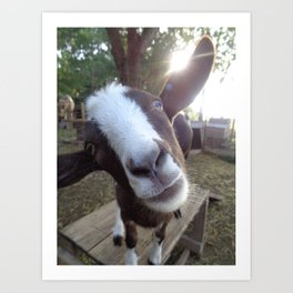 Goat Barnyard Farm Animal Art Print