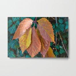 Nature Season Autumnal Leaves Metal Print