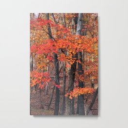 Forest Trees Metal Print