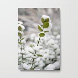 Flower Photography by Molotov Karminski Metal Print