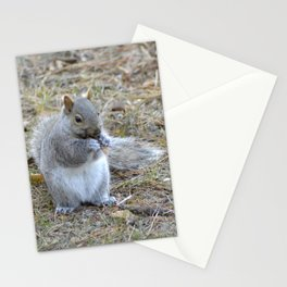 Gray Squirrel Munching on Pine Cones Stationery Cards