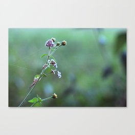 Wild flowers and cobwebs Canvas Print