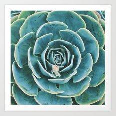 echeveria. succulent photo Art Print