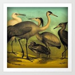 Cranes & Herons Art Print