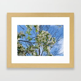 Crabapple Flowers 04 Framed Art Print