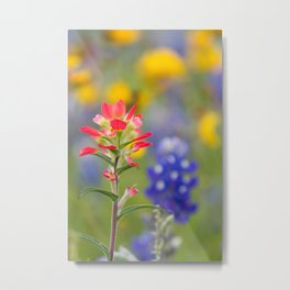 Texas Wildflowers - Indian Paintbrush, Bluebonnet Metal Print