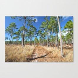 Dirt road through a pine forest Canvas Print