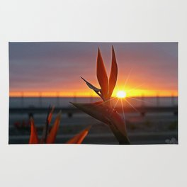 Bird of Paradise Sunburst by Aloha Kea Photography Rug