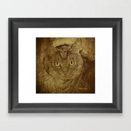Brown Tabby Framed Art Print
