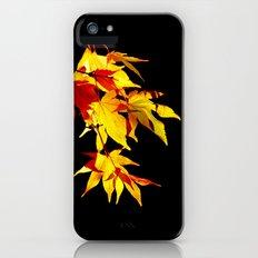 Golden Acer iPhone (5, 5s) Slim Case