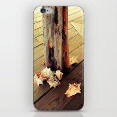 Belizean Shells iPhone & iPod Skin