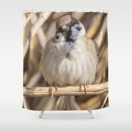 Tree Sparrow on branch (Passer montanus) Close Up Shower Curtain