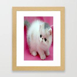 beyaz kedi Framed Art Print