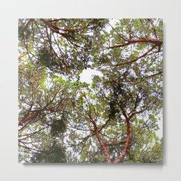 Cielo di alberi Metal Print