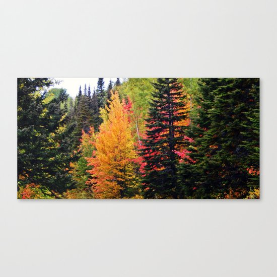 Deep in the Forest (Fall Colors) Canvas Print
