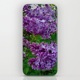 Lilacs in Bloom iPhone Skin