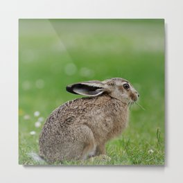 Little rabbit on a meadow Metal Print