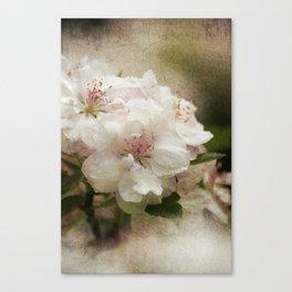 Blossom in Springtime Canvas Print
