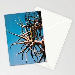 Aloe dichotoma Stationery Cards