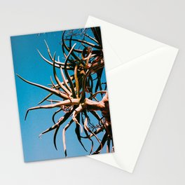 Aloe dichotoma Stationery Cards