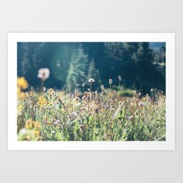 FALL FIELDS | 01 Art Print