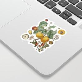 Apples Pears Peaches Sticker