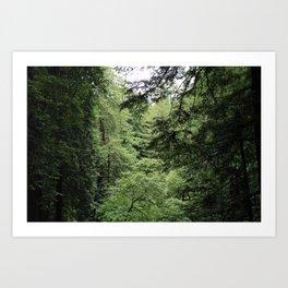Transparent Forest Art Print