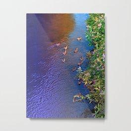 Ducks on patrol | waterscape photography Metal Print