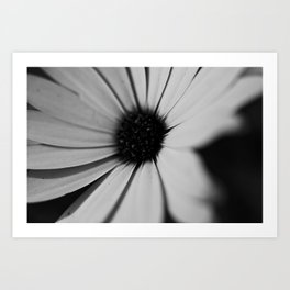 Black Daisy Art Print