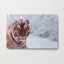 Tiger and Snow Metal Print