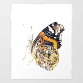 Little Butterfly Art Print