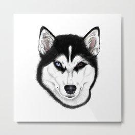 Husky different eyes Metal Print